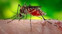 Zika vírus: saiba mais sobre transmissão, sintomas e tratamento