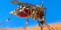 Pesquisadores criam substância que repele e mata mosquito da dengue